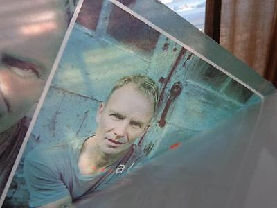 Sting *Three 2001 All This Time Promotional Cellophane Window Clings!