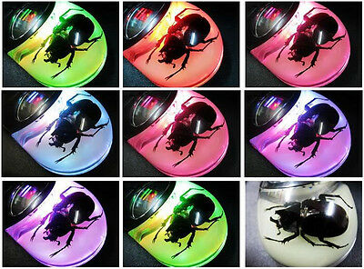 1pcs Real Nature Insect Computer Glow Mouse PC Laptop Wired USB Optical LED