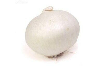 ONION 'White Gladalan' vegetable garden100 seeds