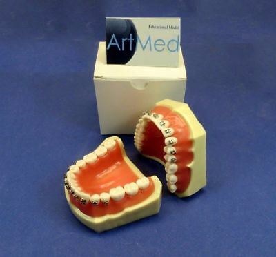 Dental Typodont Orthodontic Brackets Roth / Removable Tooth / FG3 / ARTMED