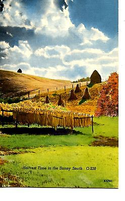 Harvest Time in Sunny South-Tobacco Curing-Scenic Fields-Vintage Postcard