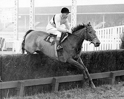 Arkle 03 Ridden By Pat Taaffe Trained By Tom Dreaper (Horse Racing) Photo Print