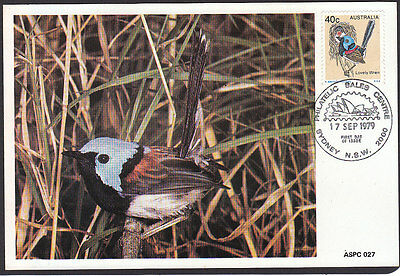 BIRDS Australia 1979 Lovely Wren Maximum Card Superb!