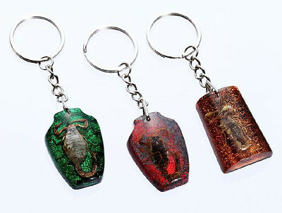 3pcs lots popular real insect scorpion mix style magic fashion key-chains