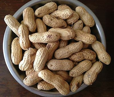 Jumbo Raw Peanuts In Shell williston peanuts, Parrot bird treat