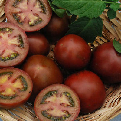 TOMATO 'Black Russian' 25 seeds Heirloom vegetable garden NON GMO open polinated