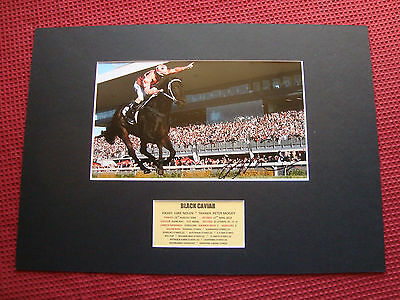 Black Caviar -Champion Horse Trainer Peter Moody Signed A3 Mounted Photo Display