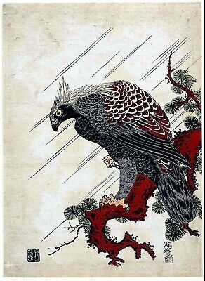 Eagle on a Pine Branch Reproduction Japanese Woodblock Picture Print by Koryusai