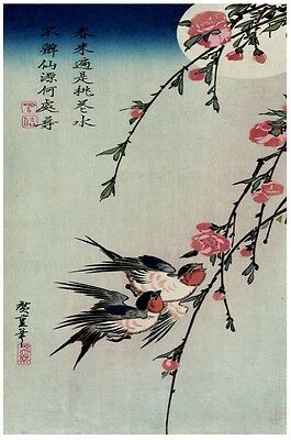 6810.Japanese pink flowers.hummingbirds fluttering.POSTER.asian art wall decor