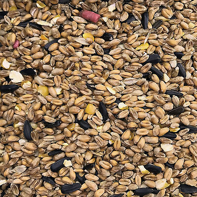 20Kg Hopewells Garden Wild Bird Seed Food suitable for feeders and bird tables