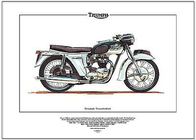 Twin Engine Triumph on triumph motorcycle wiring diagram