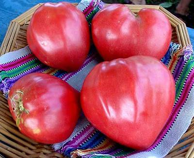 TOMATO 'Oxheart Red' Heirloom 25 seeds vegetable garden NON GMO open polinated