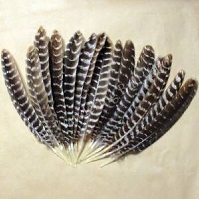 "Barred 12"" Smudging Feather for Rituals Wiccan Pagan Witchcraft Altar Supply"
