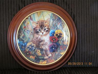Cat, Kitten Collector Plate, German Bradford Exchange 1995, with Wooden Frame