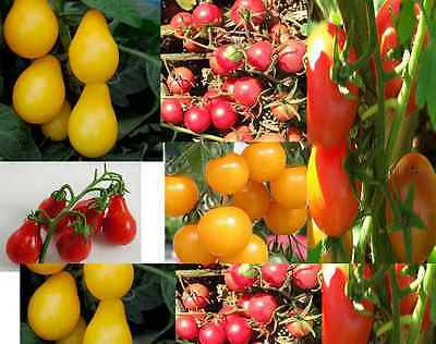 TOMATO 'Cherry mix' heirloom open-pollinated 25 SEEDS prolific NON GMO