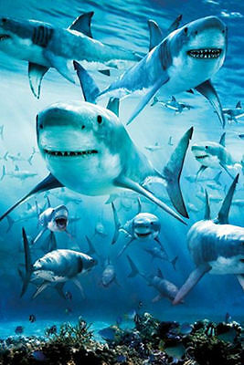 SHARK INFESTED WATERS - OCEAN POSTER - 24x36 SHRINK WRAPPED - NATURE REEF 33603