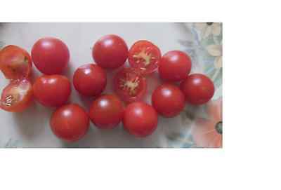 TOMATO 'TOMMY TOE' Heirloom 25 seeds vegetable garden NON GMO open polinated