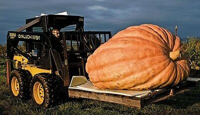 Atlantic Giant pumpkin 5 seeds * World's Largest Pumpkin * Non GMO * CombSH F35