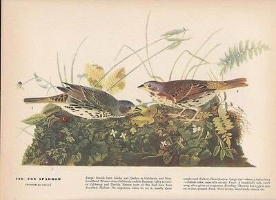 "1942 Vintage AUDUBON BIRDS #130 /""GRASSHOPPER SPARROW/"" Color Art Plate Lithograph"