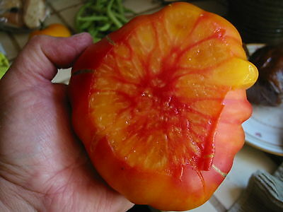 Old German Tomato (50 thru 1/4 oz Seeds) Tasty Low Acid Heirloom Beefsteak! #225