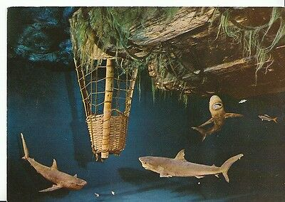 Norway Postcard - Kon-Tiki Museum - Oslo - Sharks Round Diving Basket  2375