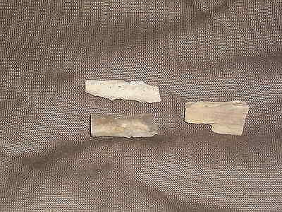 LOT OF 3 PETRIFIED WOOD Small Fossil mineral rock collectible decor display