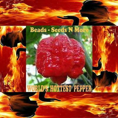 50+ TRINIDAD SCORPION MORUGA SEEDS *WORLDS HOTTEST PEPPER* / FREE SHIPPING