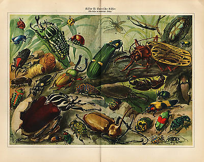 1927 INSECTS BEETLES BUGS Lot of 2 Antique Print