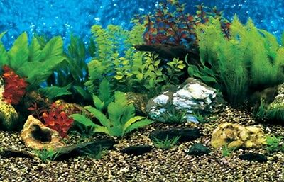 "Aquarium / Vivarium Shell and Plant Marine Background 24"" Tall Poster Fish Viv x"