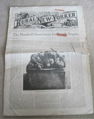 Vintage 1921 THE RURAL NEW-YORKER Newspaper Journal for Suburban & Country Home