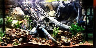 Aquarium Fish Tank Background 3D Amazon Root Wall Vivarium Reptile HAND MADE