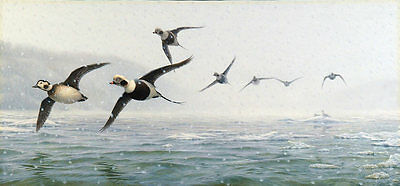 2000-Now, Large (Greater than 30in) Oldsquawflyby oil painting Original, Realism