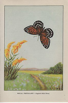"""1917 Vintage BUTTERFLY /""""SILVER SPOT FRITILLARY/"""" COMSTOCK COLOR ART Lithograph"""