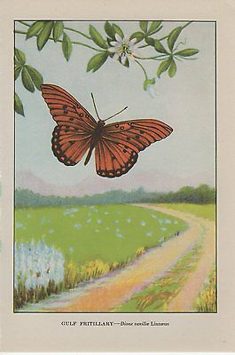 """1917 Vintage BUTTERFLY /""""CAROLINA LOCUST/"""" BEFORE /& AFTER WOW COLOR Lithograph"""
