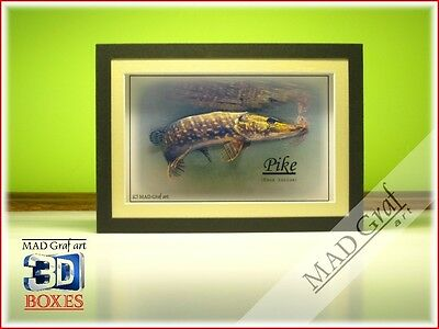 Pike fish fishing art box 3D effect MAD Graf art fishing paintings