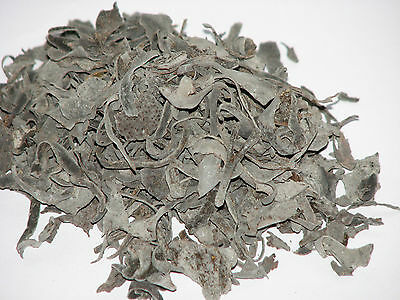 Bladderwrack herbs for incense and magical use, Metaphysical, pagan, wicca