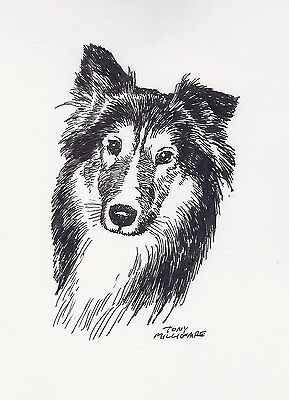 Animals: Tony Millionaire Original Ink Collie Dog Realism Small (Up to 14in.) US