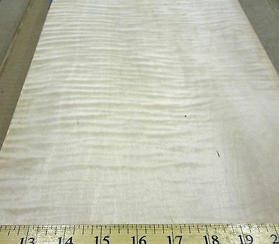"""Curly Maple Figured Quilted wood veneer 11"""" x 30"""" raw no backing """"A"""" grade 1/42"""""""