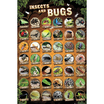 Insects & Bugs Compilation Chart POSTER 61x91cm NEW * insect types names pic