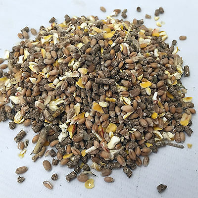 20Kg Small Holder Poultry Mix of Layers Pellets & Mixed Corn for Laying Chickens