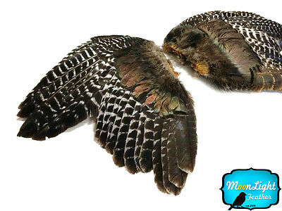 1 Pair - NATURAL BARRED Wild Turkey Complete Large Wing Feathers
