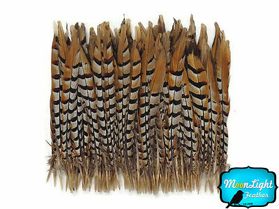 """50 Pieces - 10-12"""" NATURAL Reeves Venery Pheasant Tail Wholesale Feathers (bulk)"""