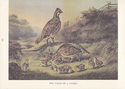 """1974 Vintage Currier & Ives HUNTING """"A PHEASANT FAMILY"""" WOW! COLOR Lithograph"""