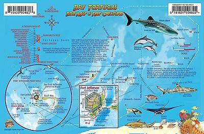 Dry Tortugas Florida Dive Map & Coral Reef Creatures Guide Franko Maps Fish Card
