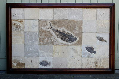Very Large Fossil Fish Panel, Green River Formation, Wyoming, Eocene Period