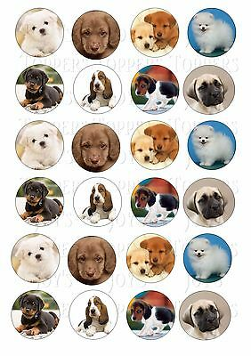 24 Puppy Puppies Cupcake Toppers Iced Icing Fairy Cake Bun Toppers
