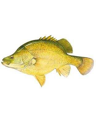 New AFN Golden Perch Fishing Sticker - Fishing Decals, Stickers, Accesories