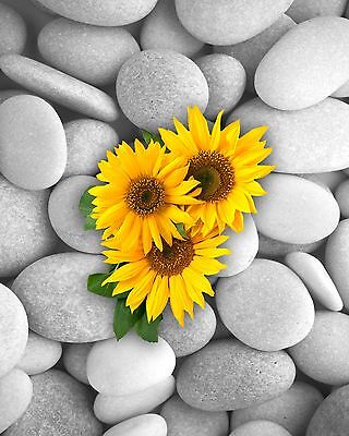 Yellow Gray Wall Decor Home Photo Art Surreal Sunflowers Stones Picture & Mat