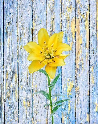 Blue Yellow Wall Art Photo Print Lily Rustic Flower Home Decor Bedroom Bathroom
