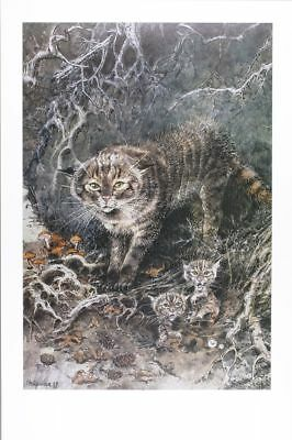 Affiche Offset  Chat sauvage